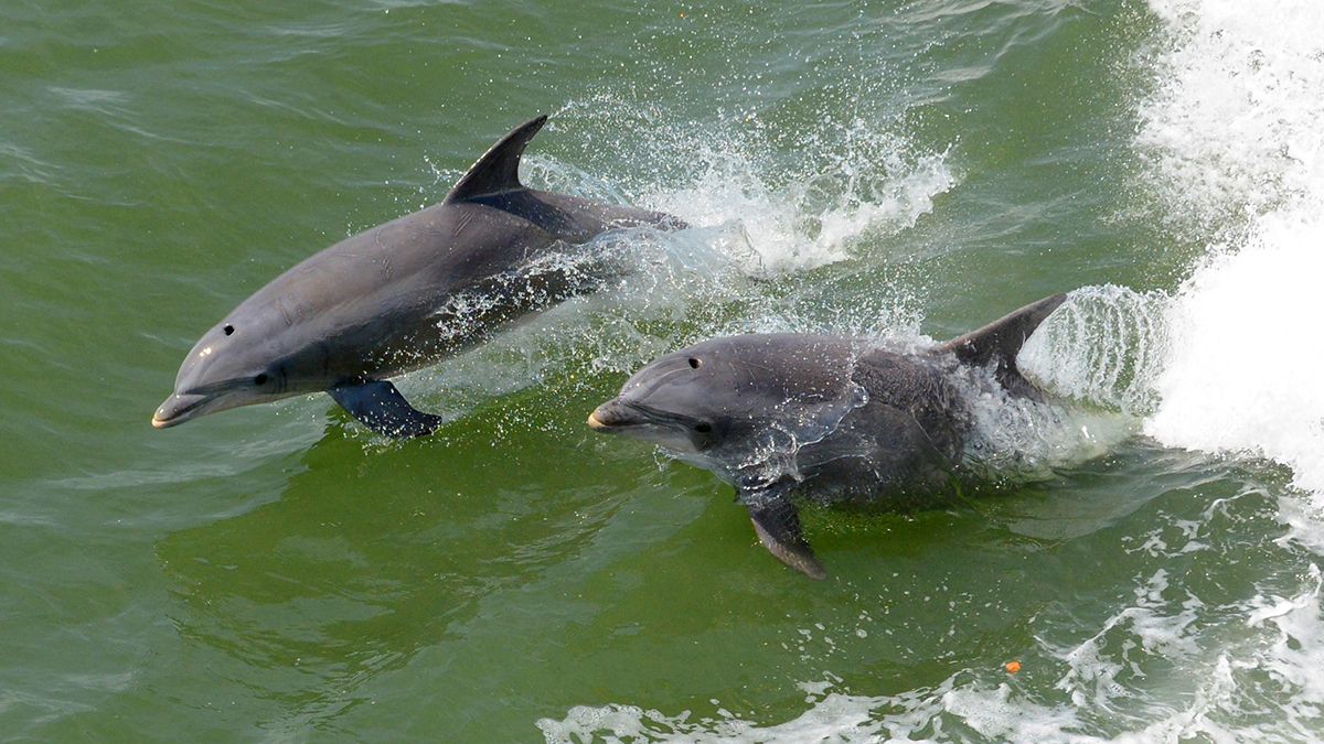 Outer Banks Dolphin Cruise